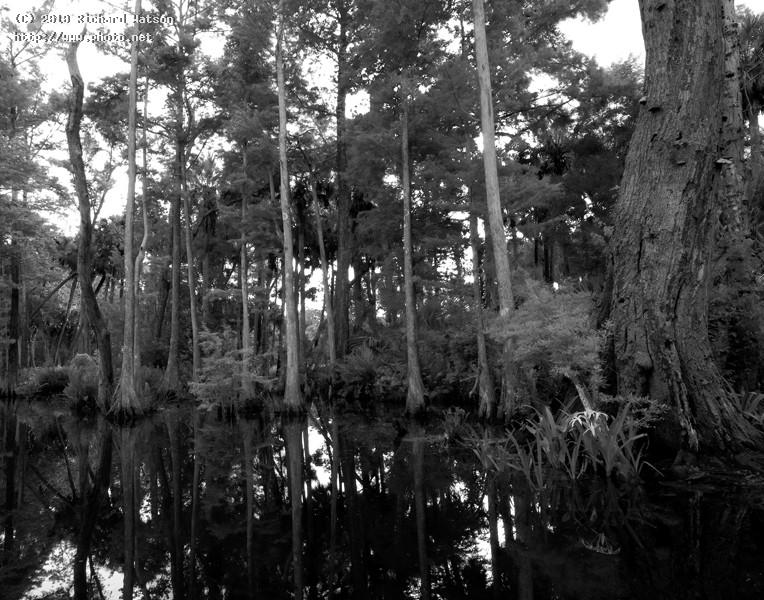 rbp editbwlandscape loxahatchee florida wetlands river watson richard