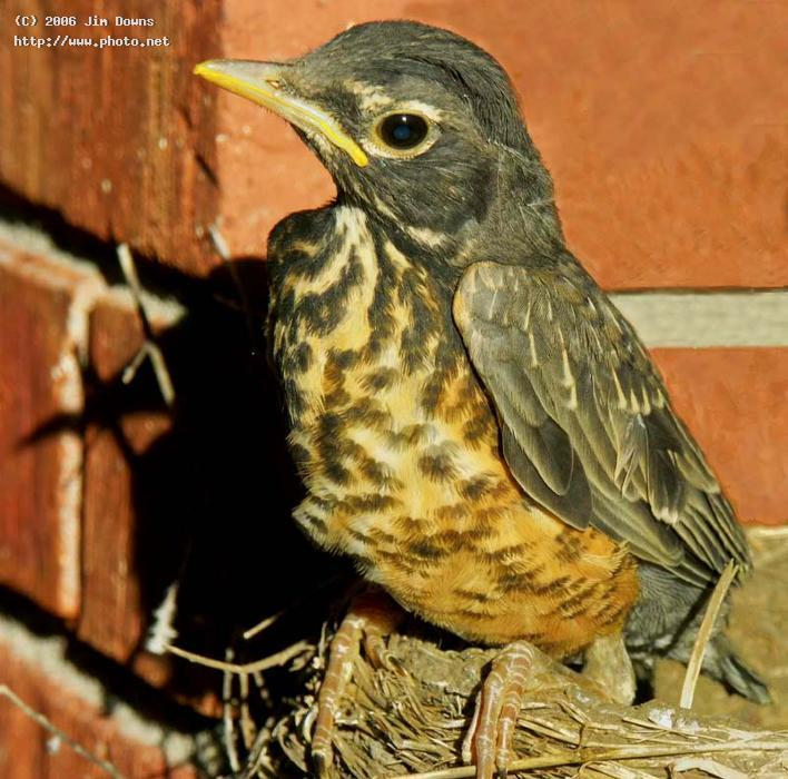 robin chick contemplating first flight baby seeking critique downs jim