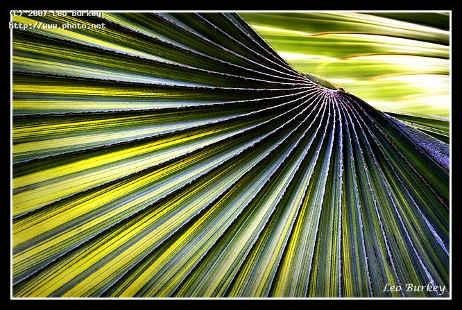 sabal palm leaf art flower plants flowers seeking critique burkey leo