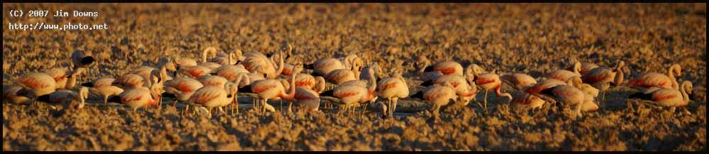 salar de atacama national flamingo reserve desert seeking critique downs jim