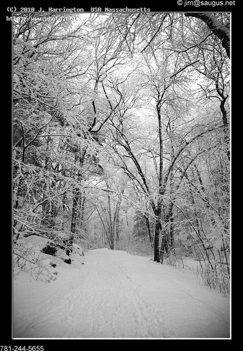 snow covered trees breakheart reservation saugus m ma seekin harrington usa massachusetts j