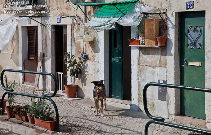 so vicente lisbon lisboa portugal architecture dog barros joao