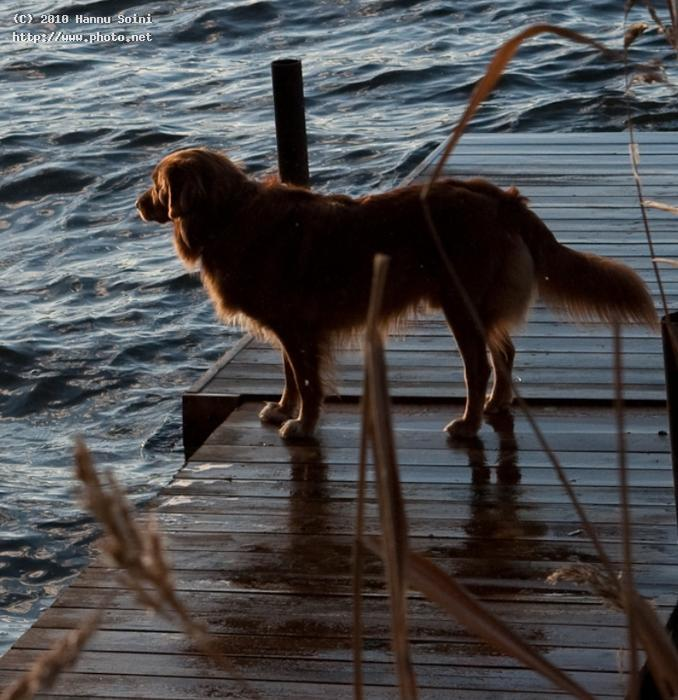 storm coming dogs seeking critique soini hannu