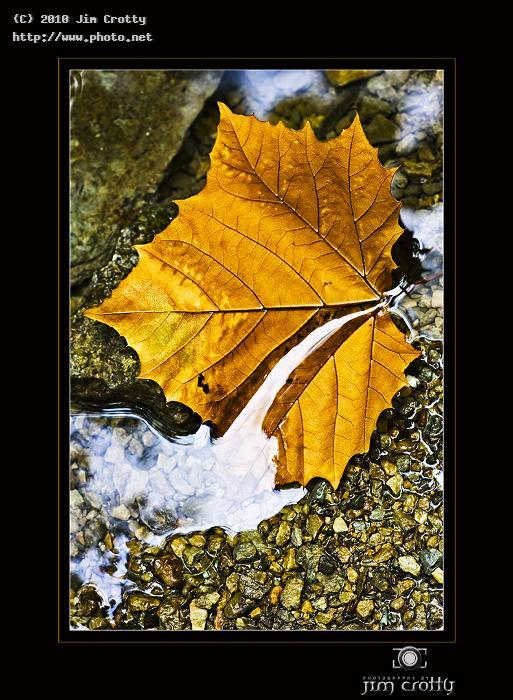 sycamore leaf in stream by jim crotty details photography autumn fall close