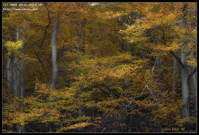 tardor seeking critique estarl enric
