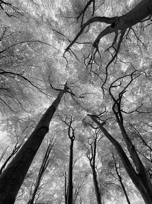 tentacles trees monochromatic bw seeking critique arnold wolfgang