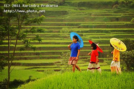 the colours colour field paddy umbrella tasikmalaya payung fan prakarsa rarindra