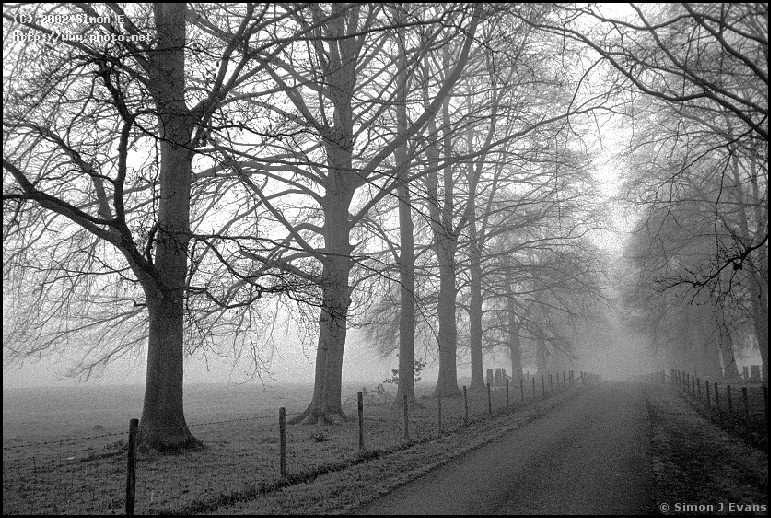 the driveway to glansevern hall near berriew on a april morning misty drivew evans simon