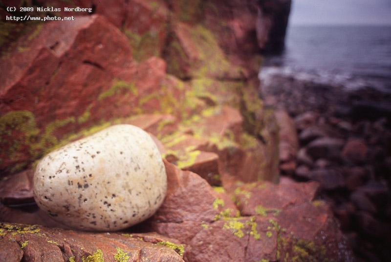 the white stone ii rocks sea seeking critique nordborg nicklas