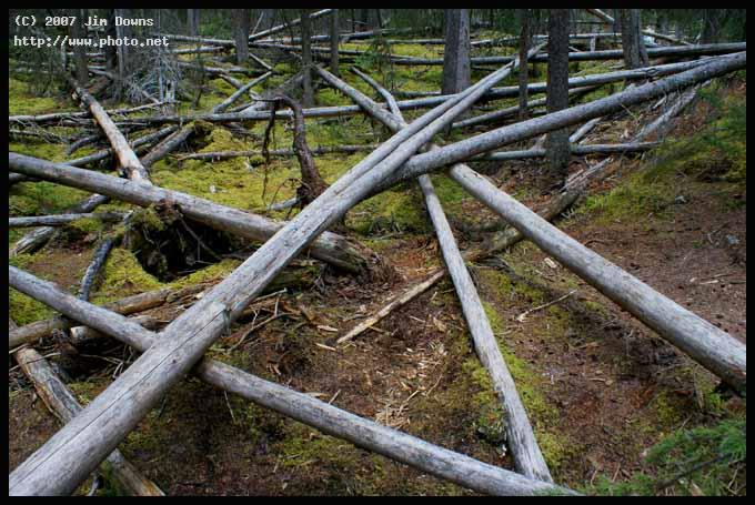 timber tangle calgary banff seeking critique downs jim