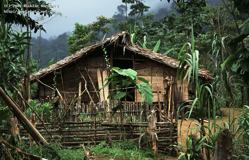 timos house papua rainforest nordborg nicklas
