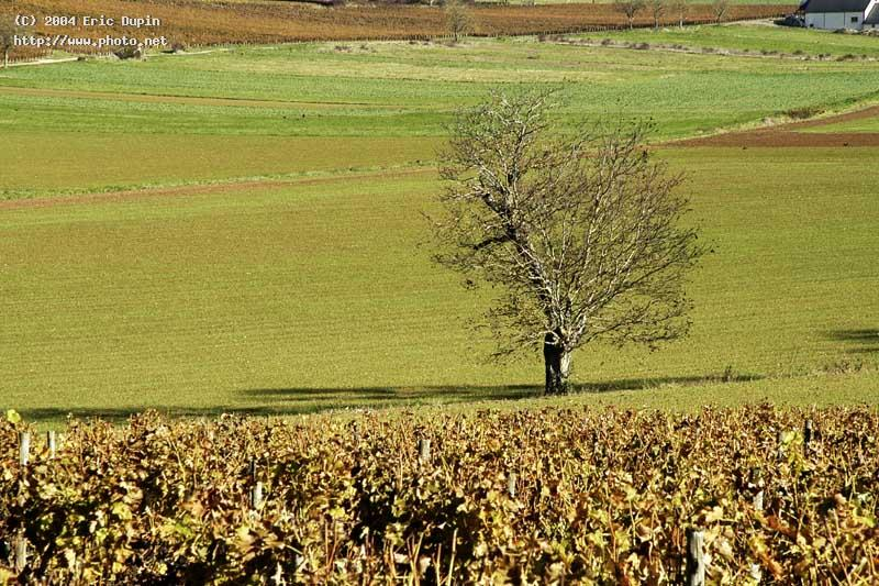 tree near sancerre dupin eric