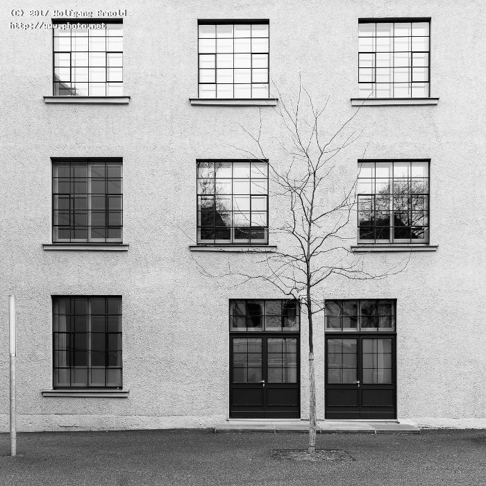 untitled bare tree square window bw arnold wolfgang