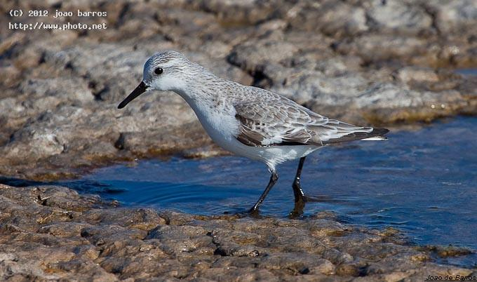 untitled bird barros joao
