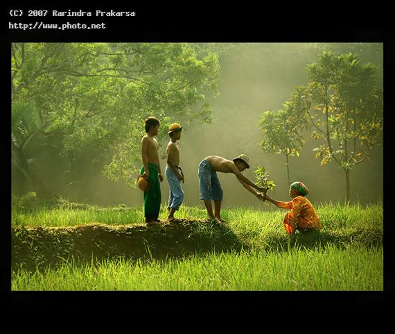 untitled care paddy family mother love rural farmer light r prakarsa rarindra