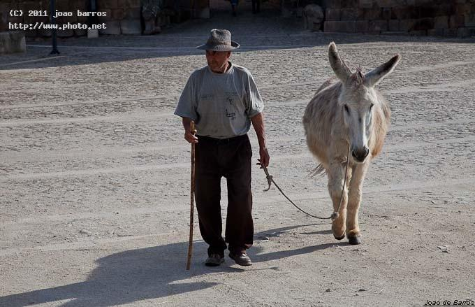 untitled donkey poor man old barros joao
