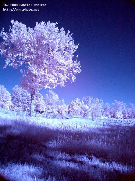 untitled infrared ramirez gabriel