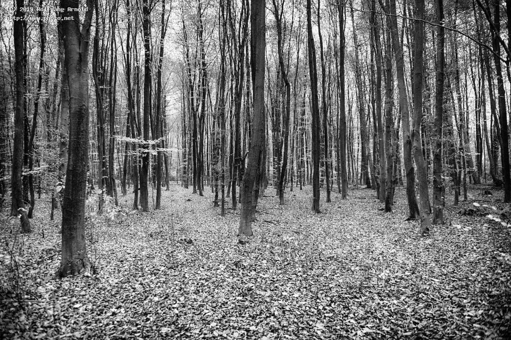 untitled monochromatic bw forest wood timber trees arnold wolfgang