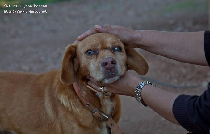 untitled old dog barros joao