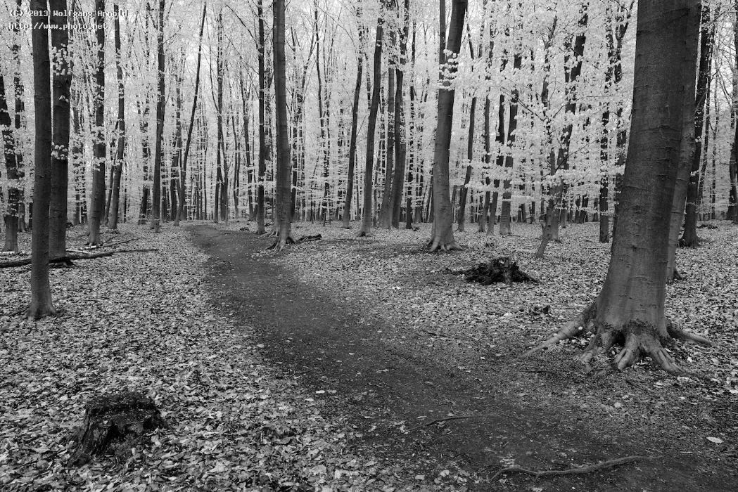 untitled trees monochromatic bw forest wood timber arnold wolfgang