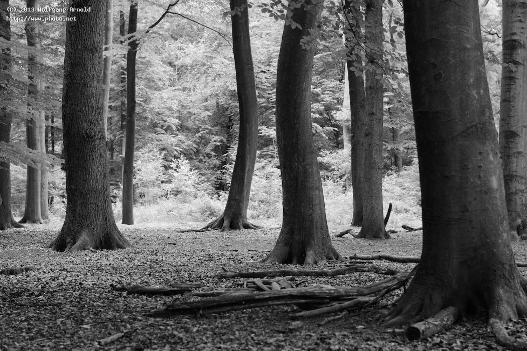untitled wood timber forest monochromatic bw trees arnold wolfgang