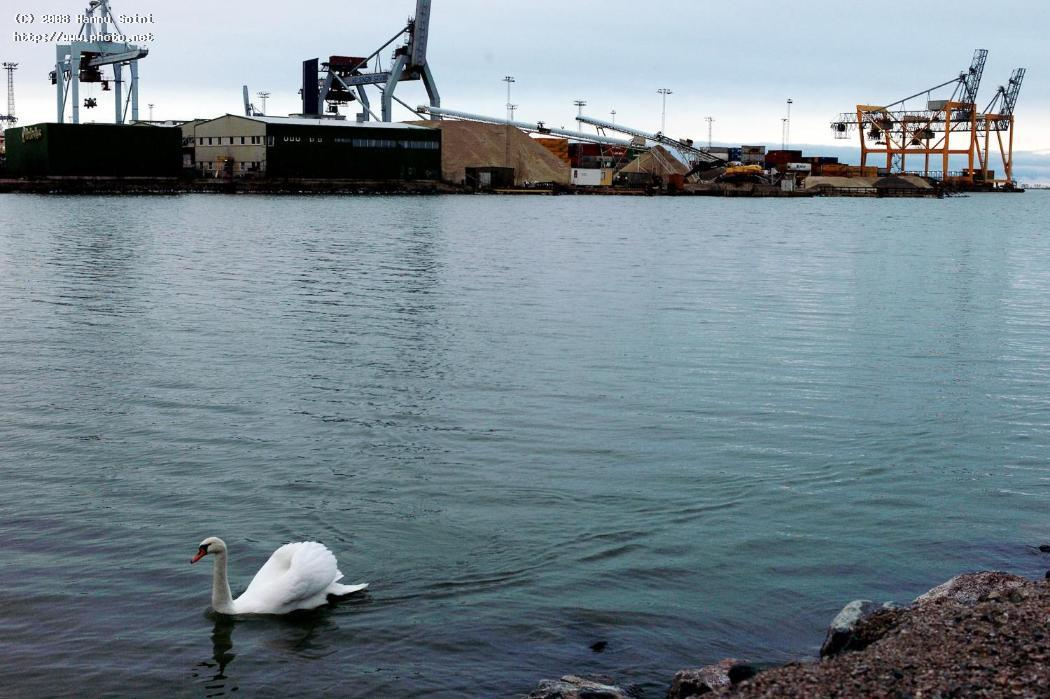 urban swan finland seeking critique soini hannu