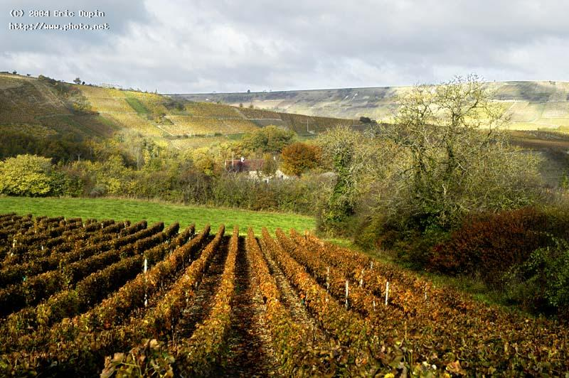 wineyard in sancerrois seeking critique dupin eric