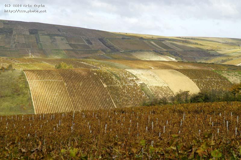 wineyard of sancerre dupin eric